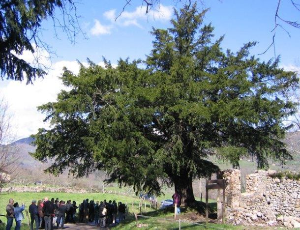 Tejo de Abamia