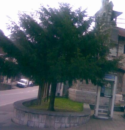Tejo iglesia de San Antonio. La Foz de Morc�n.