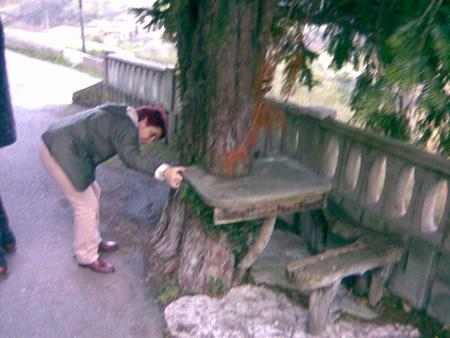 Tejo con mesa en La Collá. Morcin. enero 2008