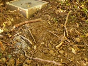raices y arqueta en Abamia