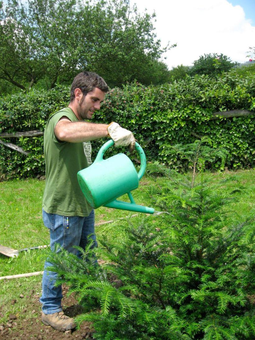 regando al tejo recién plantado que llega de tierras valencianas