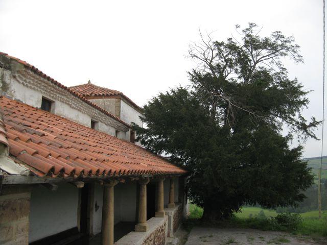 Tejo de Ferroñes. primavera '08.