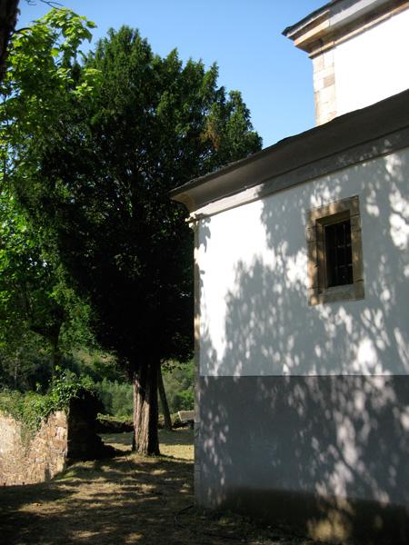 Tejo de La Braña. agosto '08.