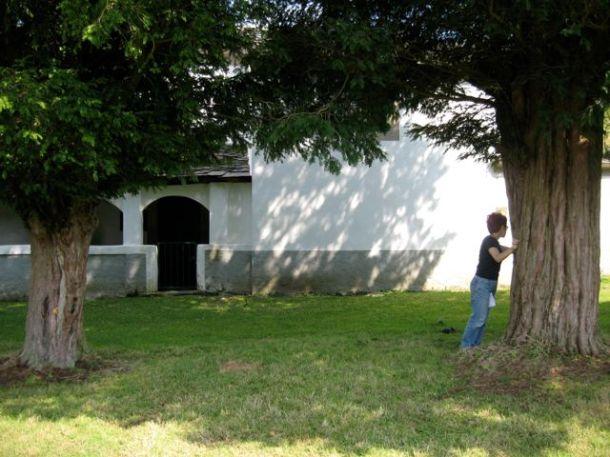 Midiendo un tejo en Rozadas. Agosto '08