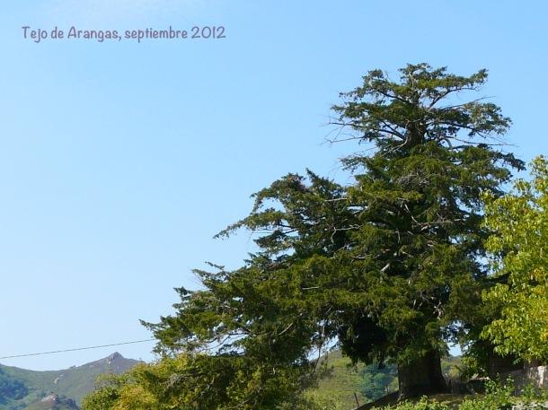 Tejo de Arangas, septiembre 2012