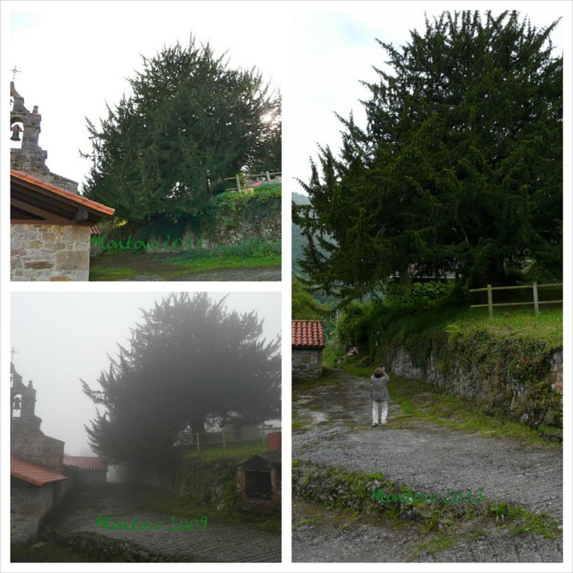 Montovo2009,2011,2013