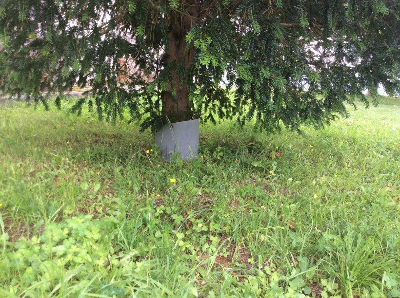 tronco Teja